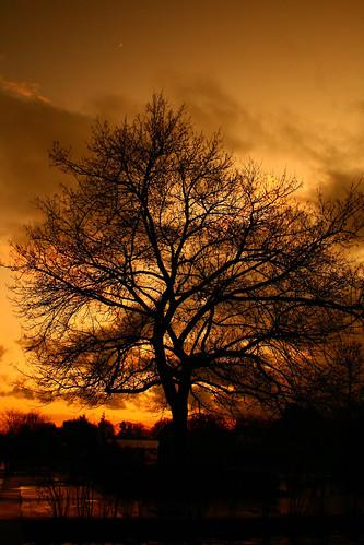 Sunset Tree by Moniquezzz