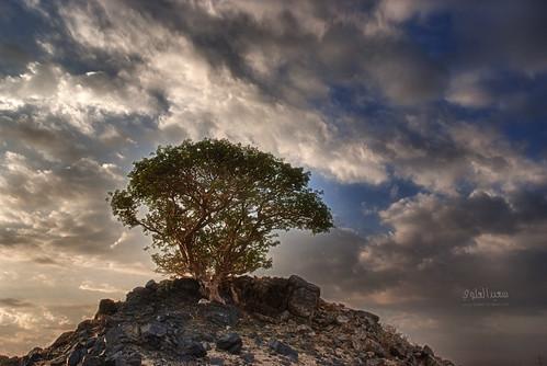 ملاكي الجميل by Saeed al alawi
