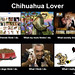 what ppl think i do chihuahua lover