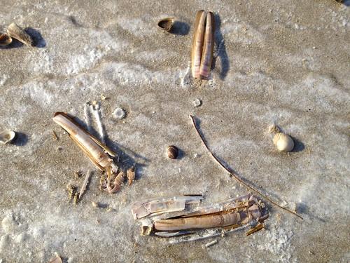 shells frozen in place