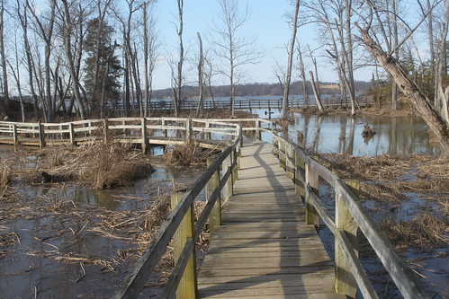 Mason Neck State Park - Bay View Trail - Marsh Walkway