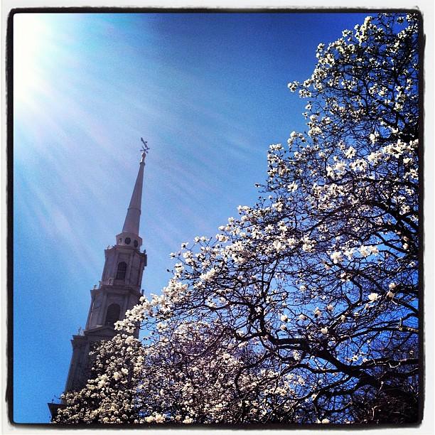 Sunshine and magnolias