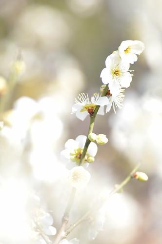 だいぶ、春