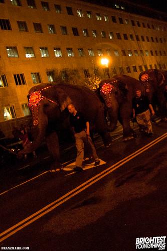 12-03_elephants119-82