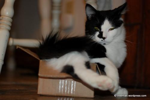 sprocket box 2-11-2012 6-40-46 PM