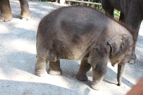 20120117_1919_baby-elephant