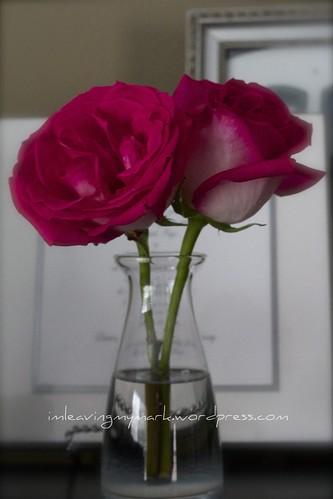 twins' flowers