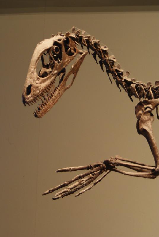 Dinosaurs didn't Adapt