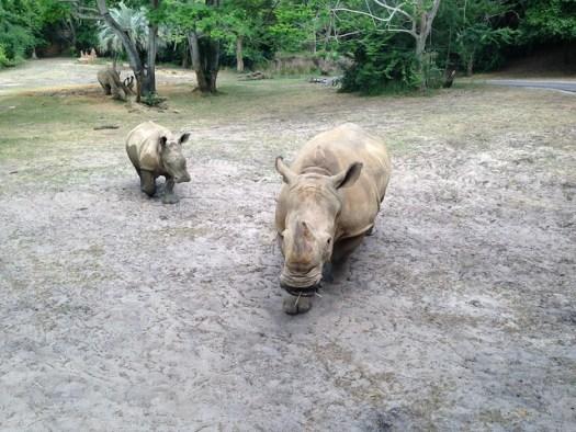 Kilimanjaro Safari, Animal Kingdom WDW