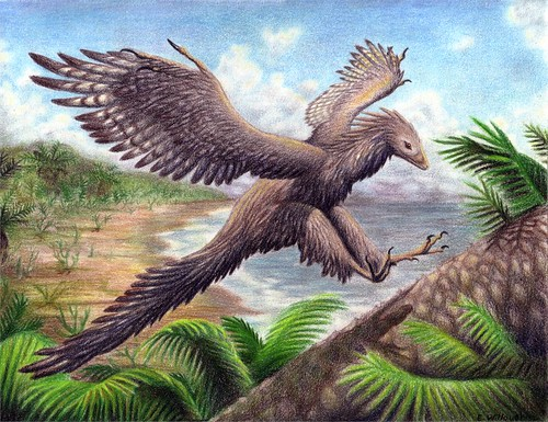 Archaeopteryx___Landing_by_Ferahgo_the_Assassin