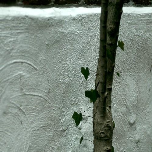 philly urban nature #9666 by korafotomorgana