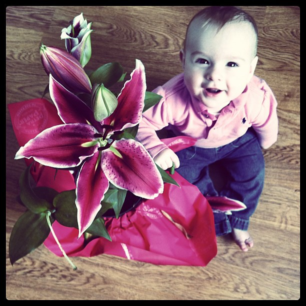 Lilly's lilies