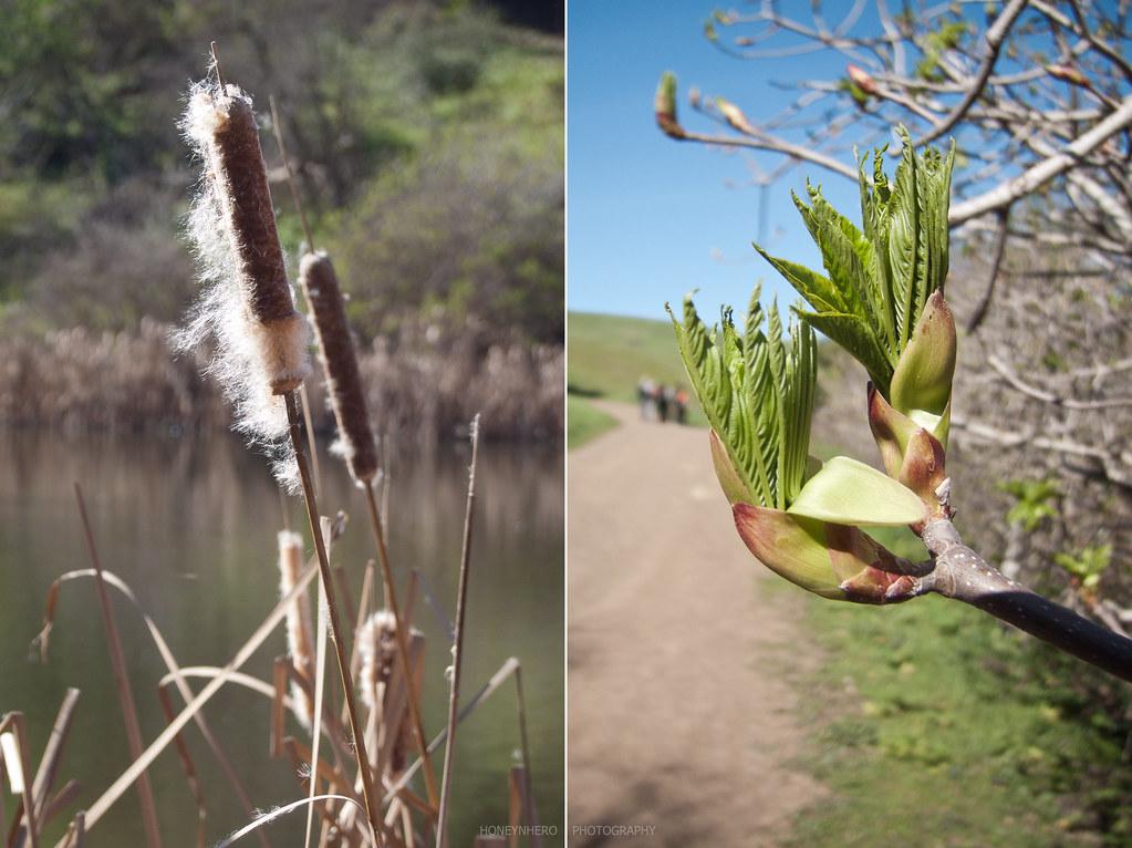wild plants, Garin dry creek Pioneer regional park