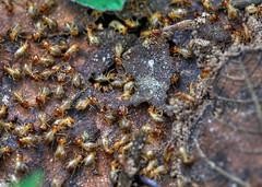 Do it yourself termite extermination diy termite baiting and more do it yourself termite extermination solutioingenieria Images
