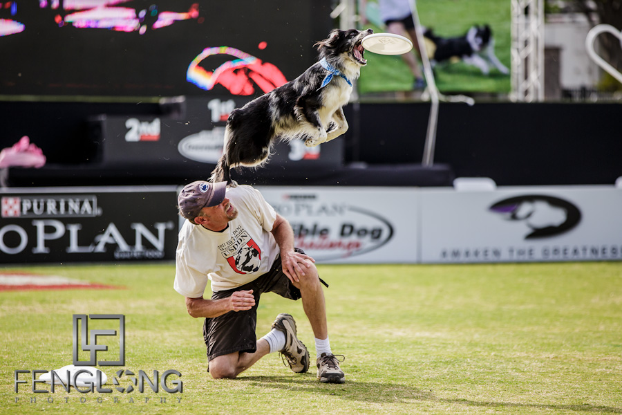 When Dogs Fly | Purina Incredible Dog Challenge | Centennial Olympic Park | Atlanta Wedding Photographer