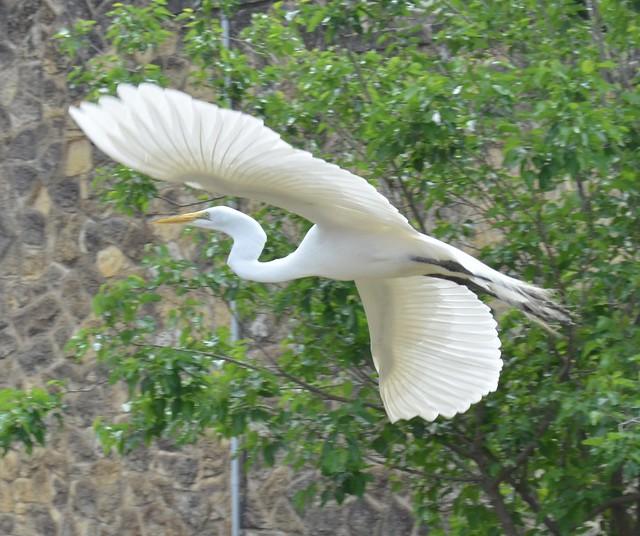 Local Crane