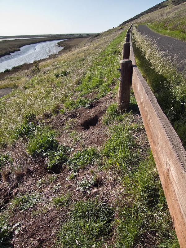 Tidelands trail, Don Edwards San Francisco Bay National Wildlife Refuge