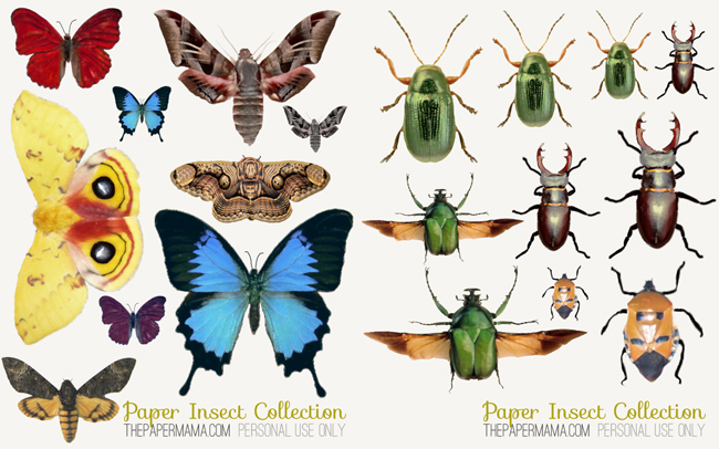 Names Images You Can And Insects Print
