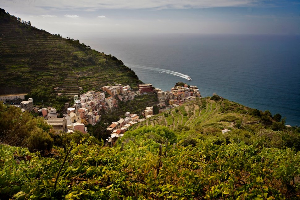 The typical terraced hills in the Cinque Terre Park
