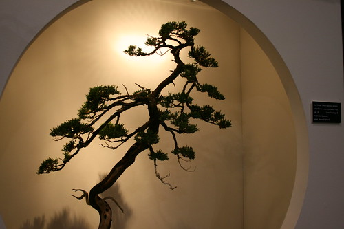 Pretty Bonsai display