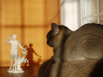 Cats in ancient Greece: Artemis and Oyster