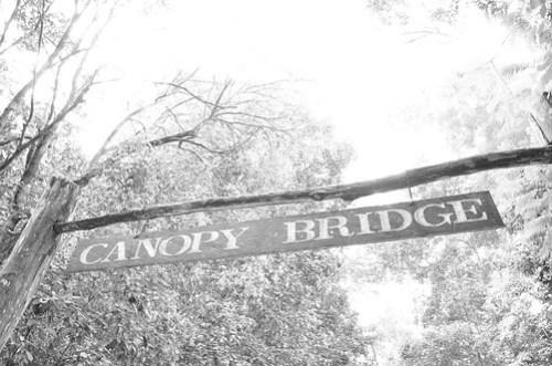 To Canopy Bridge