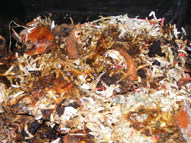 Garbage in ( worm bin)