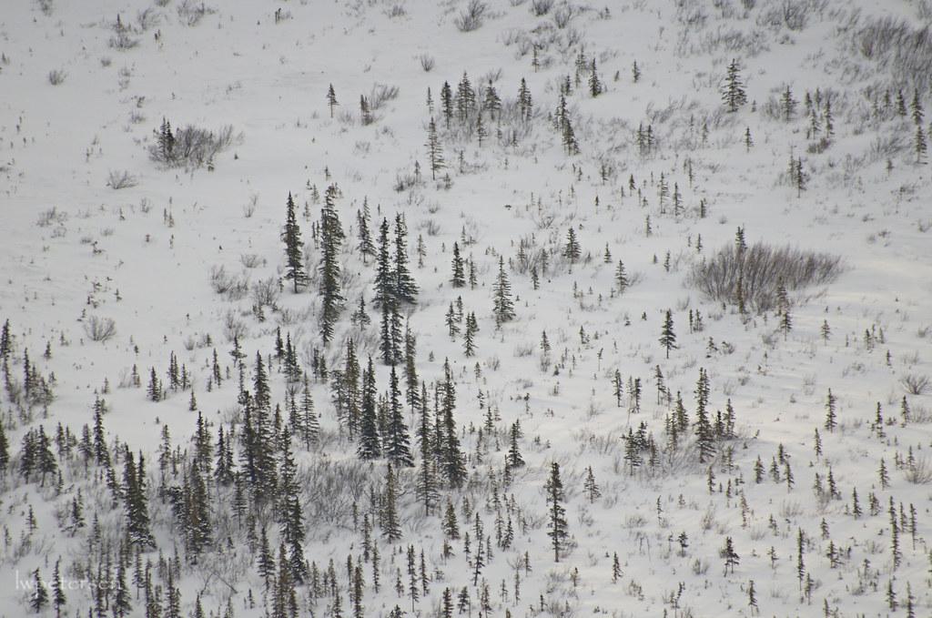 Trees-on-a-hillside