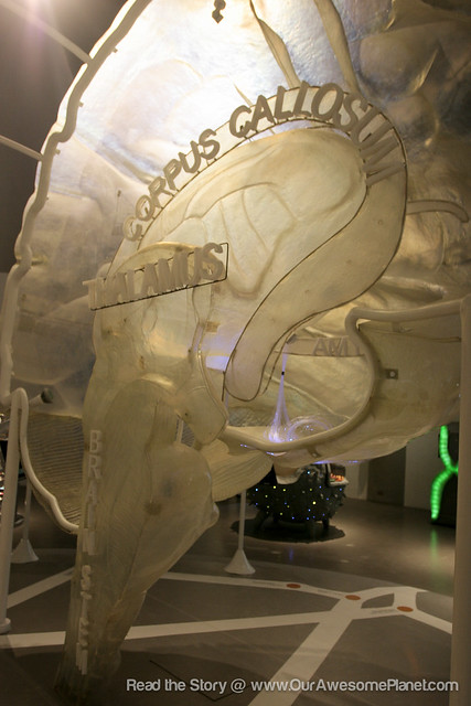 The Mind Museum @ BGC-20.jpg