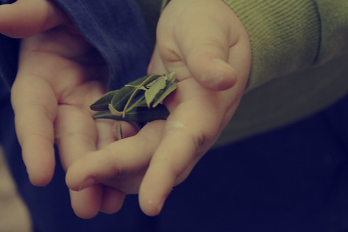 olive by Rossella Sferlazzo