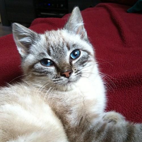 Cody says: Good Morning! #ThisIsCody