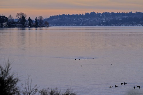 Lake Washington along the Burke-Gilman Trail by kingcountyparks