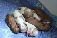 Puppies 2.0