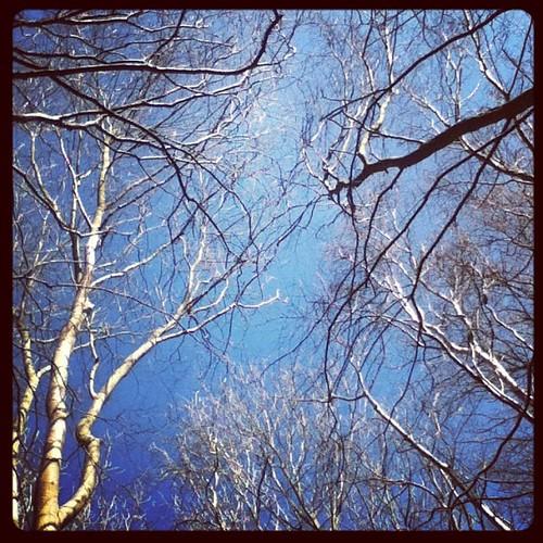 Reydon wood - looking up