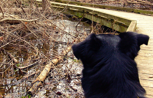 a dogs point of view