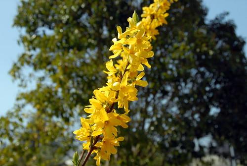 Arbres en fleurs HD-013