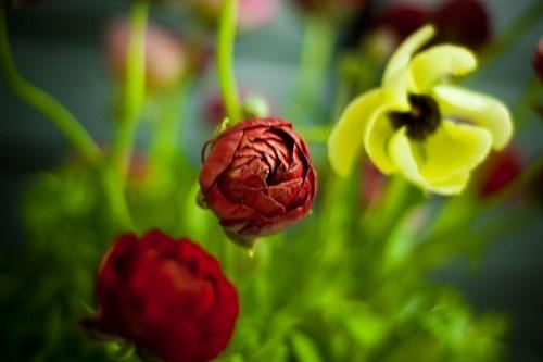 Life List: Learn Botany (arrange flowers)