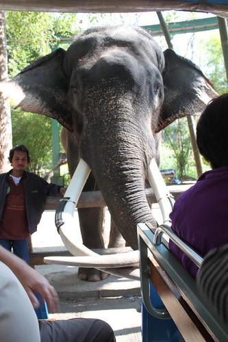20120117_1911_CM-zoo-elephant