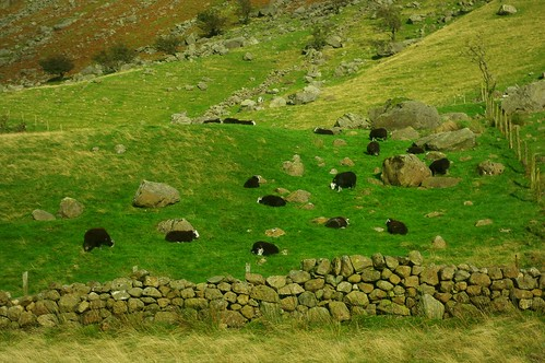 20110924-31_Sheep near Seathwaite Borrowdale by gary.hadden