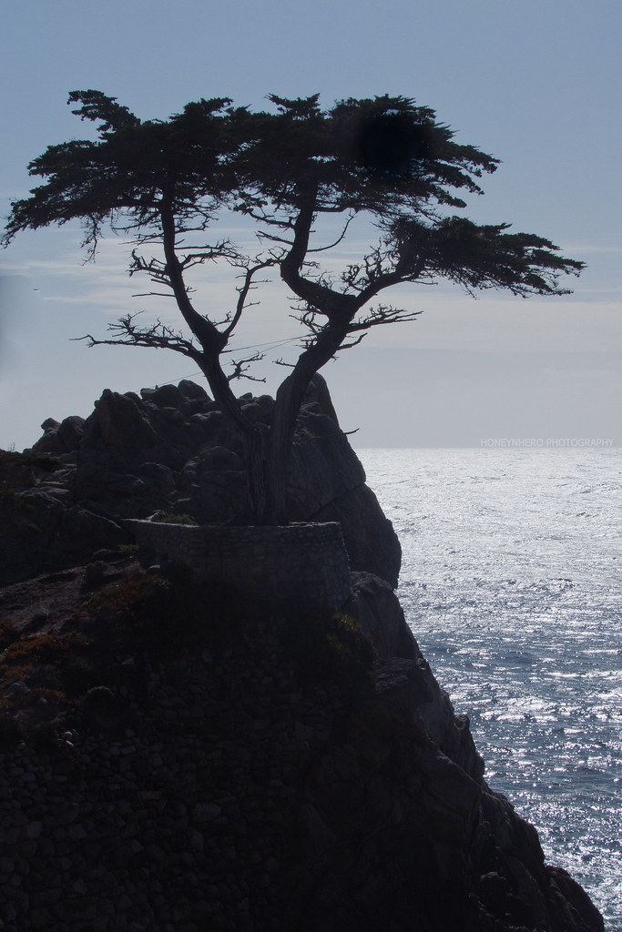The Lone Cypress Silhouette, Pebble Beach