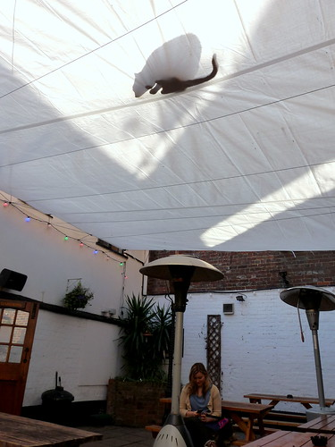 Shadow of a cat - pub in Reading, England, 2012.