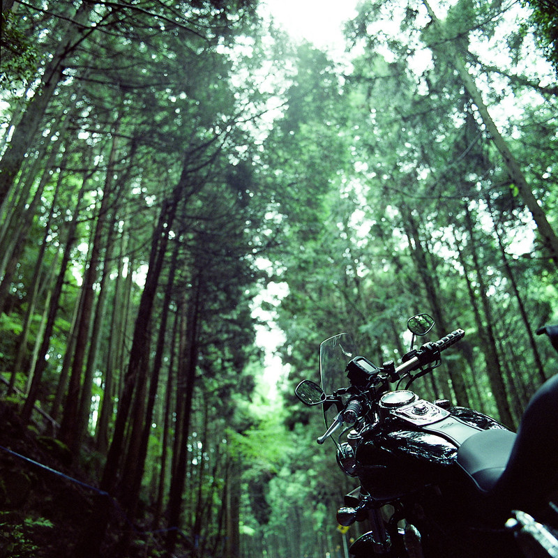 Touring through the deep forest
