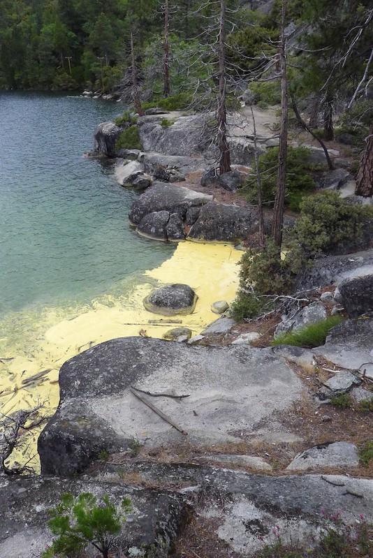 pine pollen 1