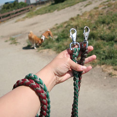Tony's leashes
