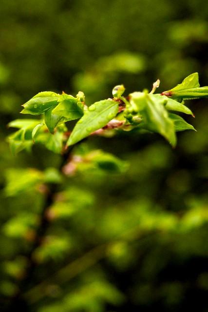 Spring Green 2