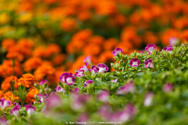 flower_Tapseac-0200