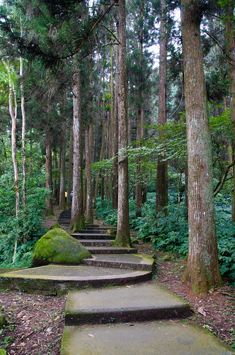 Sitou Forest Park (14 of 57)