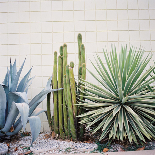 outdoorexotic3.jpg