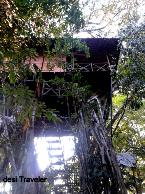 Tree House Rain forest India hotel