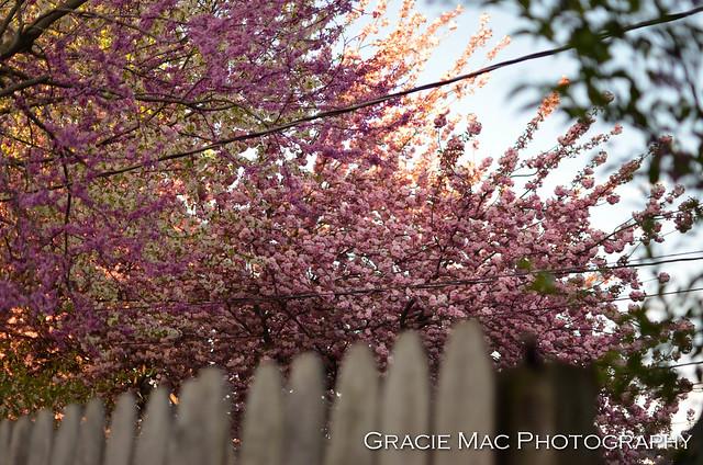 1204_spring_023